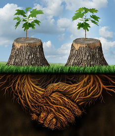 picture of handshake  - Helping one another as a mutual benefit business support group concept as two chopped trees with new growth of hope emerging as teamwork with the roots shaped as a handshake providing the strength for success - JPG