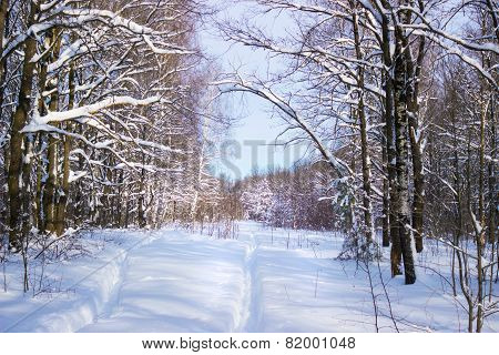 Trails In The Woods In The Snow Period