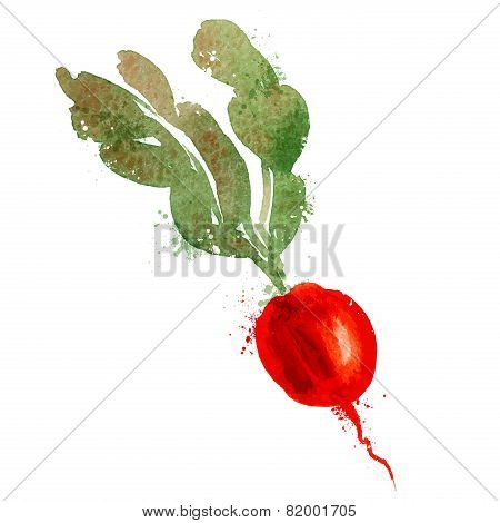 radish vector logo design template. vegetables or food icon.