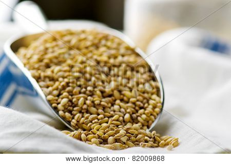 Barley Groats In A Metal Shovel.