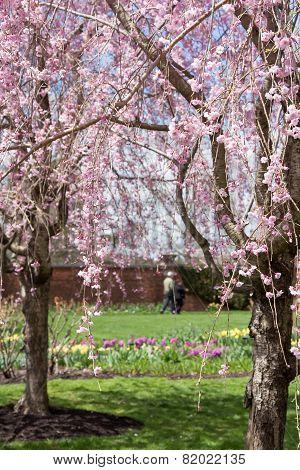 Spring Stroll