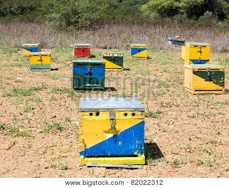 Group Of Bee Hives