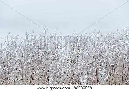 Frozen Winter Background