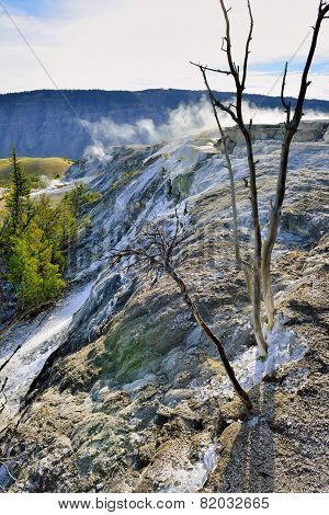 Dead Trees In Grassy Spring Area Of Mammoth Hot Springs In Yellowstone National Park, Wyoming