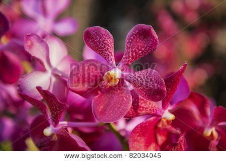 Beautiful Purple orchid flower tree
