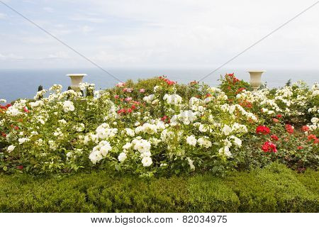 Rose Garden On Sea Shore