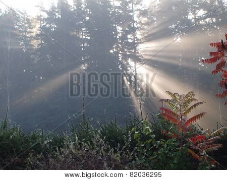 Mystical morning sunrise, South Bohemia