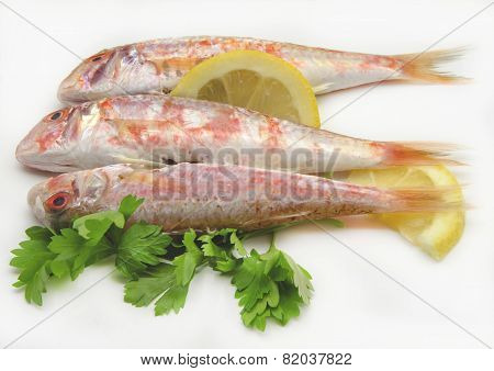Fresh Red Mullet