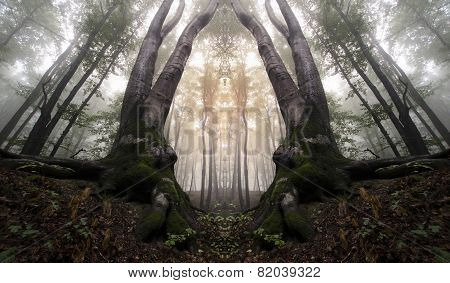Surreal scary symmetrical forest with fog on Halloween