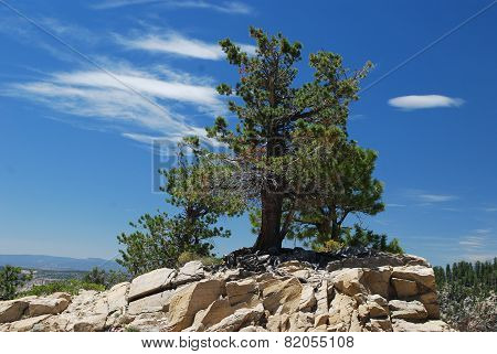 Lone Juniper On Rocky Hillside