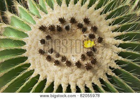 Giant cactus in the Nong Nooch Botanical garden, Pattaya, Thailand.