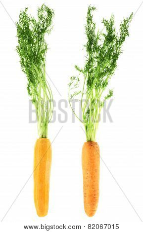 Carrots with the green top isolated