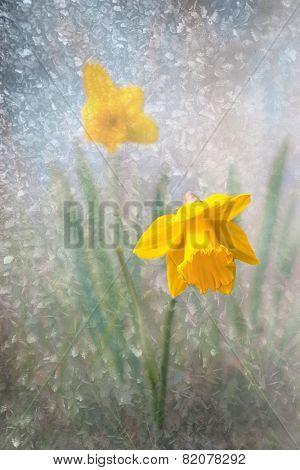 Daffodil On Bright Spring Day