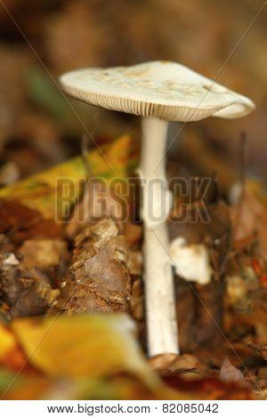 Unidentified White Mushroom