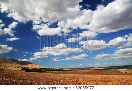 Yellow Field With Blue Skies And Clouds