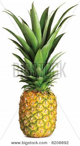 Whole Pineapple On A White Background