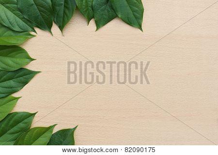 Left Border From Fresh Leaf