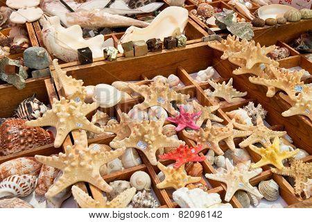 Starfish And Seashells  For Sale