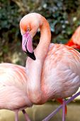 stock photo of pink flamingos  - Group of pink flamingos in a park - JPG