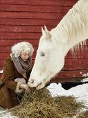 image of feeding horse  - Attractive blond woman feeds a white horse overcast winter day - JPG