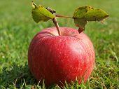 picture of bohemia  - autumn fruit in the grass southern Bohemia Czech Republic - JPG
