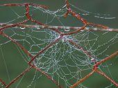 stock photo of bohemia  - Water drops on a spider web southern Bohemia Czech Republic - JPG