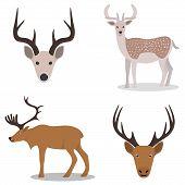 pic of deer head  - Deer and their head  - JPG