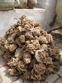 stock photo of desert-rose  - Heap of desert roses  - JPG
