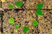 pic of stone floor  - Heart green shape the stone floor background - JPG
