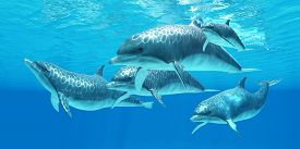 stock photo of bottlenose dolphin  - Bottlenose dolphins live in a group called pods and forage the ocean for fish prey - JPG
