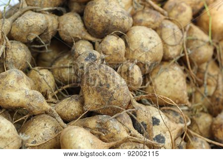 Cassava, Yam Bean In The Market