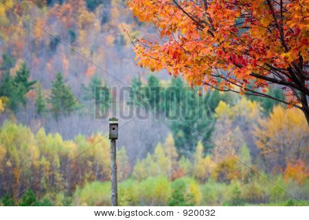 Bird Feeder In Fall Foliage