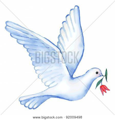 Watercolor Soaring Dove, Vector Illustration