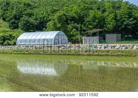 Small Green House By The Rice Field