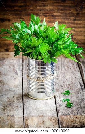 Organic Fresh Bunch Of Parsley In Tin
