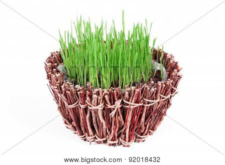 Fresh green grass in a wooden bowl isolated on white background