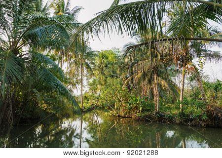 Coconut In The Garden.