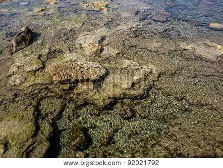 Transparent Sea With Sea Weed And Sea Urchins Under Water