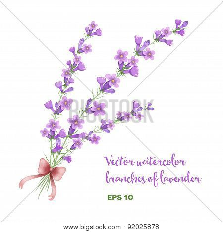 Vector watercolor branch of lavender.