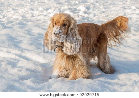 A Dog Is Standing On Snow