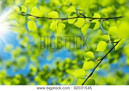 Birch branch against the sky