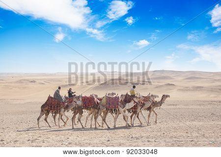 Camel Caravan Moving In Giza