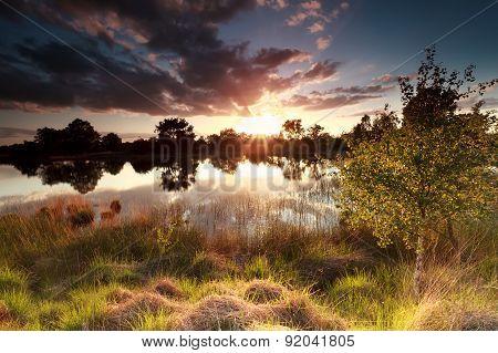 Golden Sunset Over Wild Lake