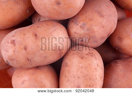 Fresh harvested red potato tubers