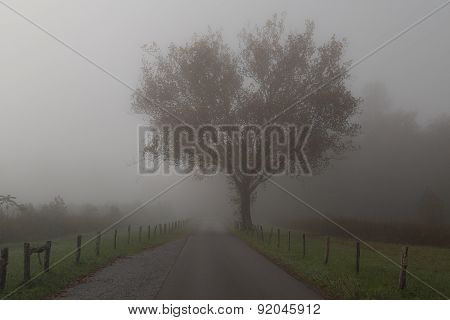 Great Smoky Mountains National Park - Cades Cove Tree in Fog
