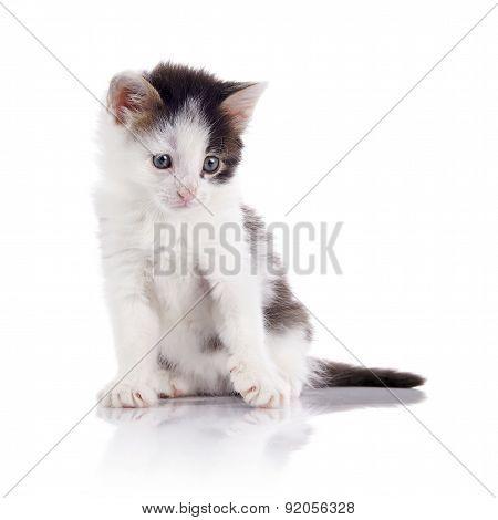 The Lovely Spotty Kitten.