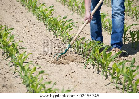 Hoeing Corn Field