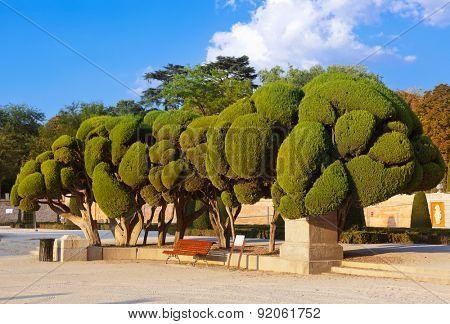 Trees at Retiro park - Madrid Spain