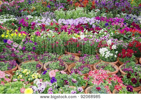 Potted Floral Plants