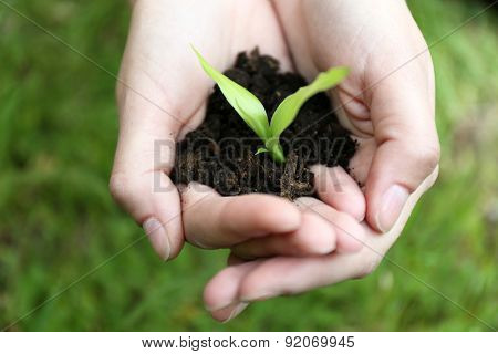 Green seedling growing from soil in hands outdoors